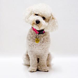 perro 12