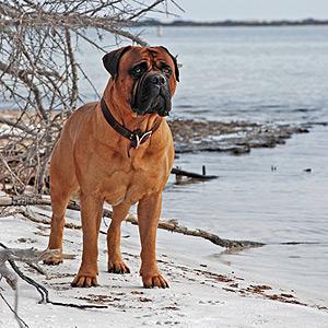 perro 25