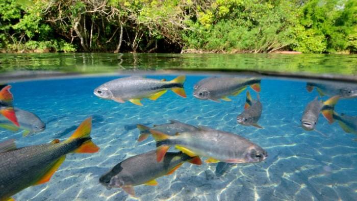 Im genes de ecosistemas naturales y artificiales for Como oxigenar el agua de un estanque para peces