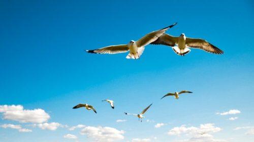 Resultado de imagen para Ecosistema aereo
