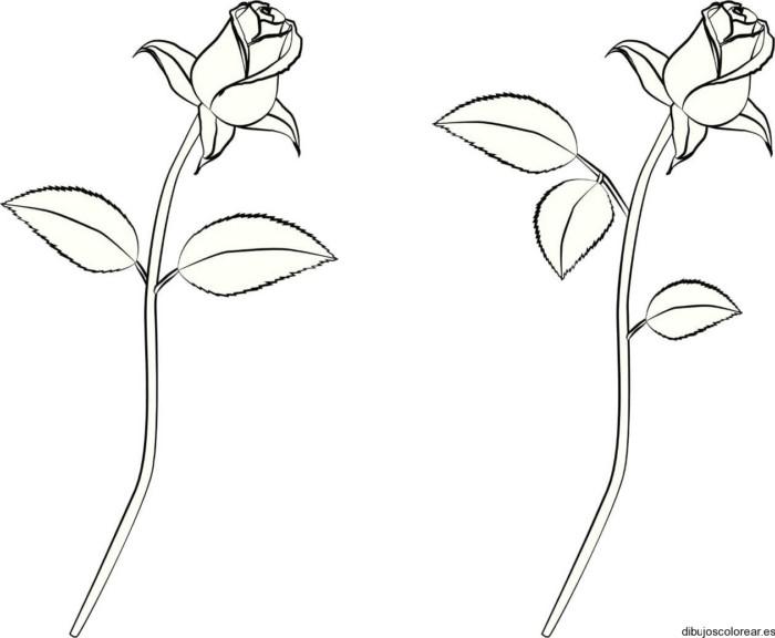 Imágenes de ROSAS Bonitas, Originales, con Frases, para Dibujar y ...